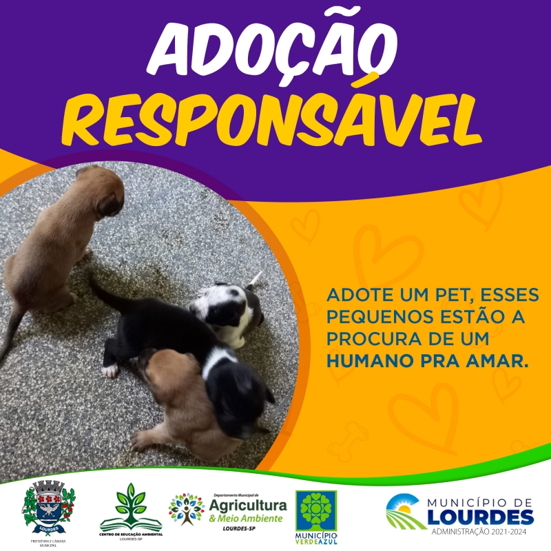 Noticia adocao-responsavel